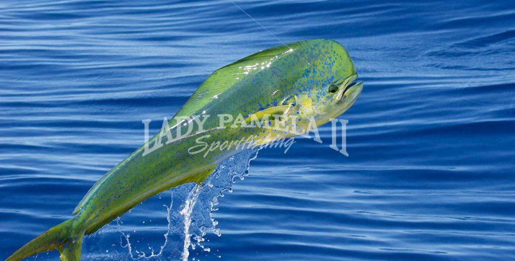 deep-sea-fishing