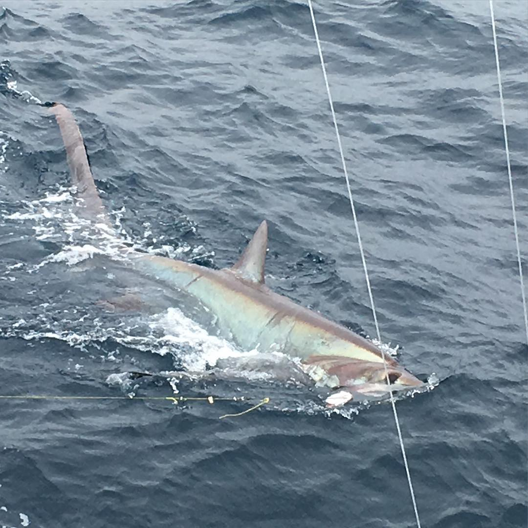 shark fishing charters for monster sharks in fort lauderdale
