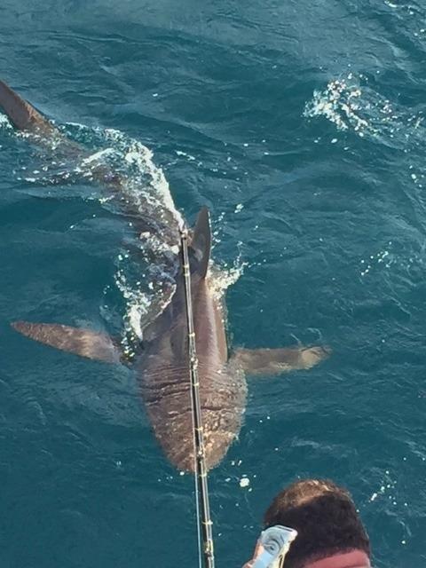 Monster Duskey Shark