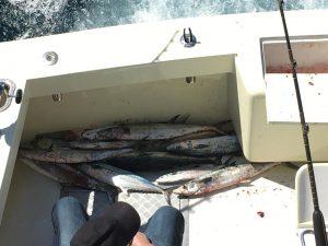 BOX FULL OF FISH
