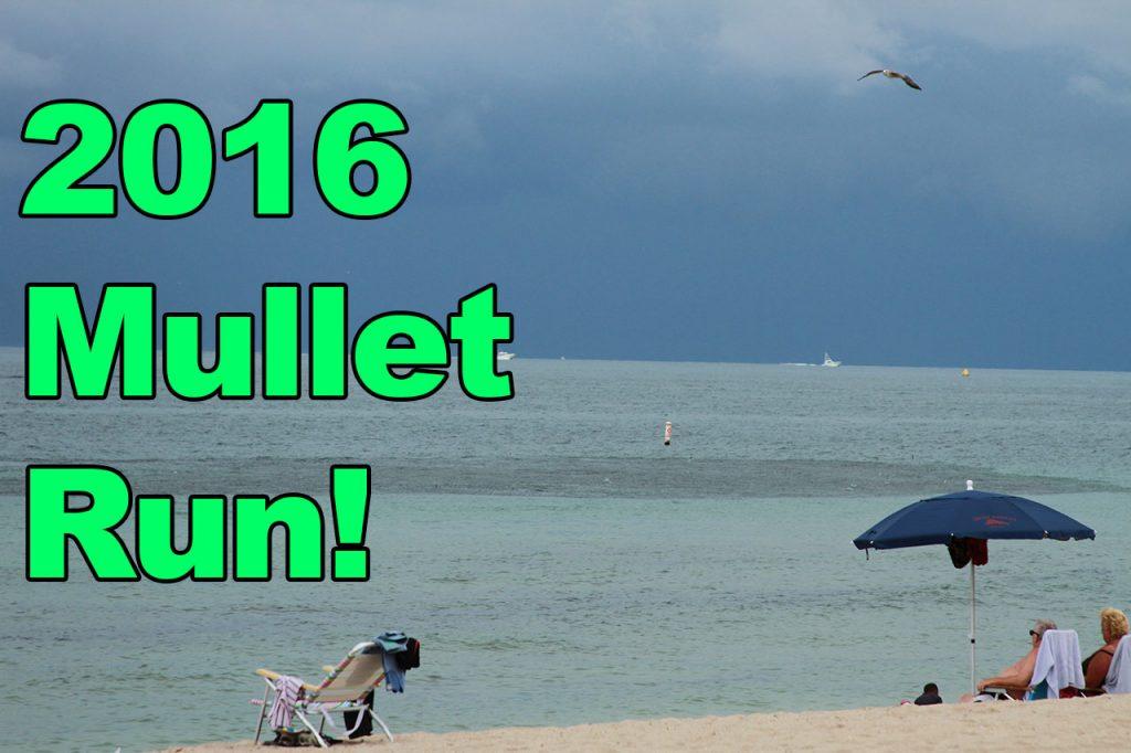 Mullet Run