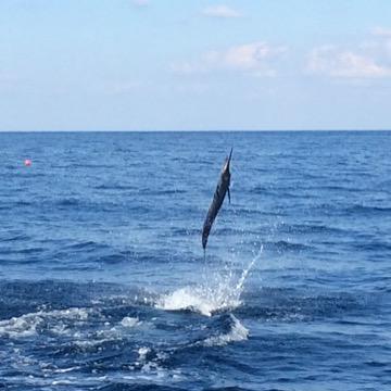 sailfish-jump