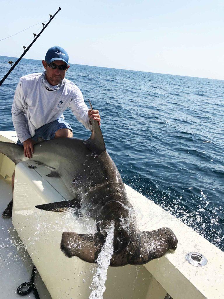 montser shark